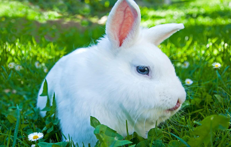 Photo wallpaper gentle, fur, rabbit, cute, color