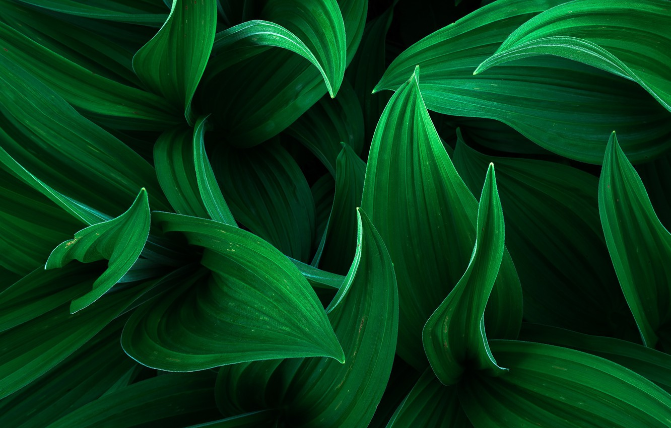 Photo wallpaper leaves, macro, flowers, green background