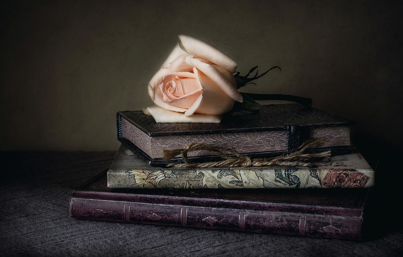 Photo wallpaper style, rose, books, Bud