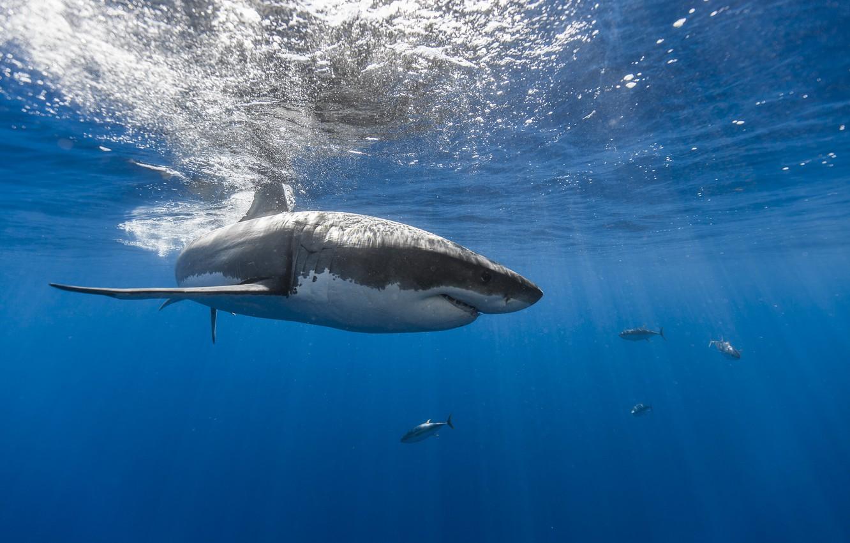 Photo wallpaper sea, fish, shark