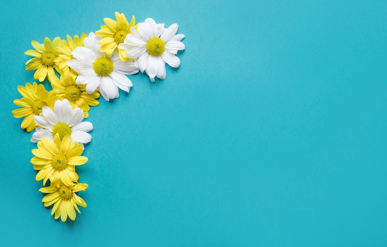Photo wallpaper flowers, background, chamomile, flowers, spring, composition