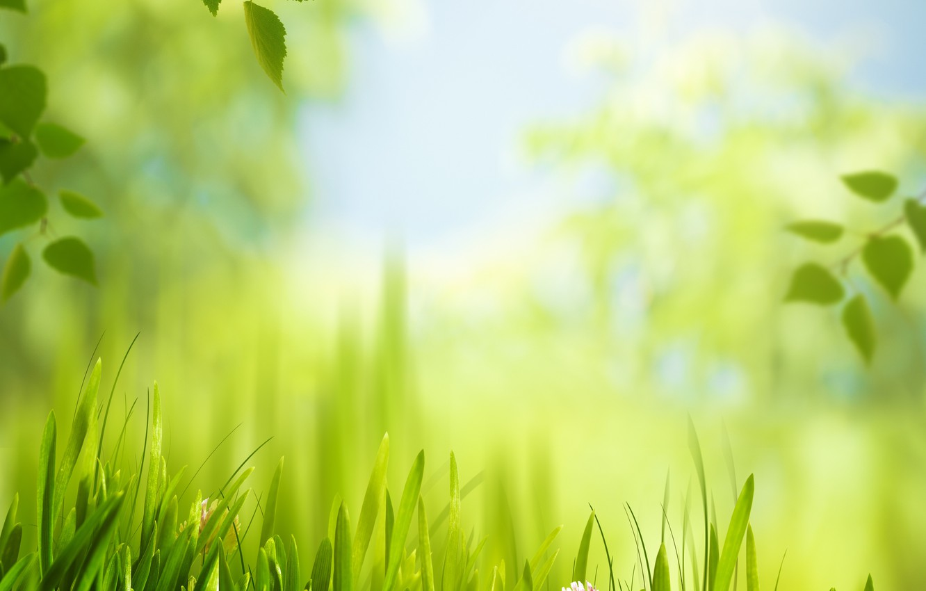 Photo wallpaper grass, leaves, the sun, meadow