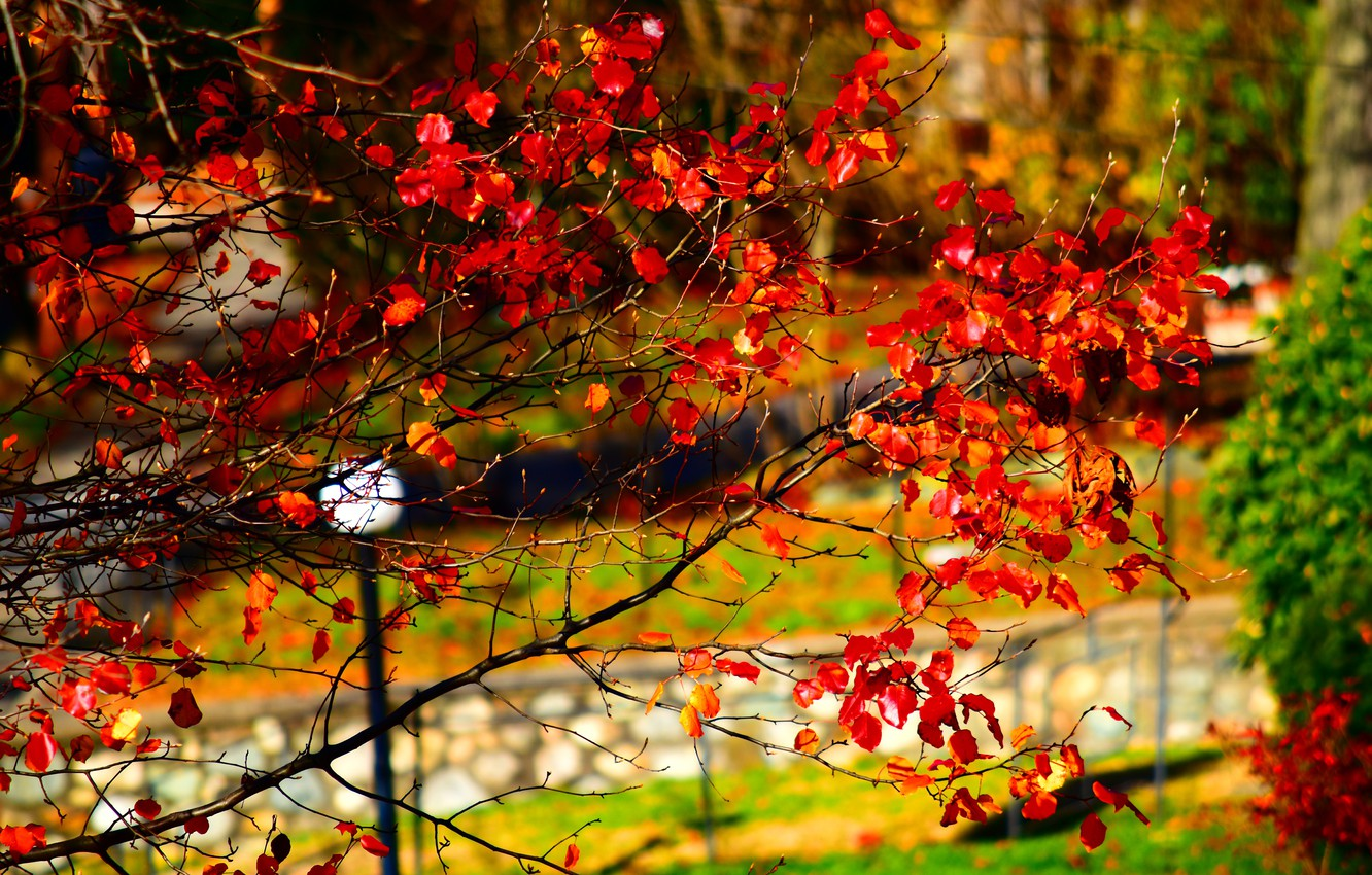 Photo wallpaper Autumn, Park, Fall, Park, Autumn, Red leaves, Red leaves