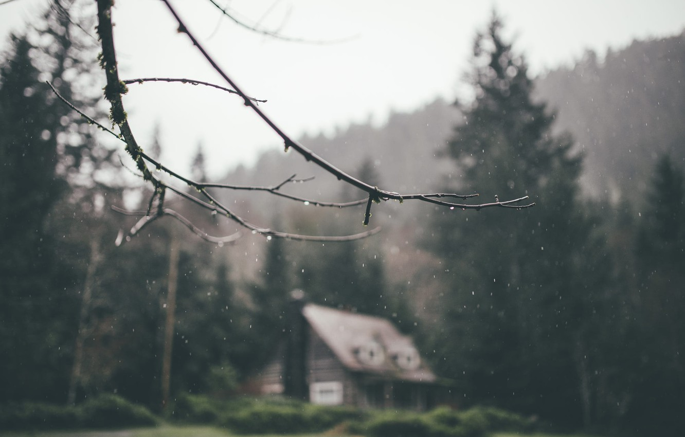 Photo wallpaper forest, house, rain, branch