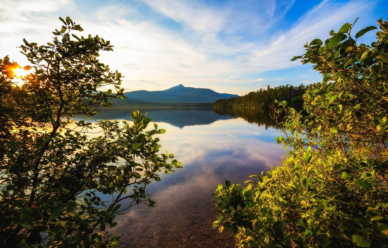 Photo wallpaper trees, landscape, branches, lake
