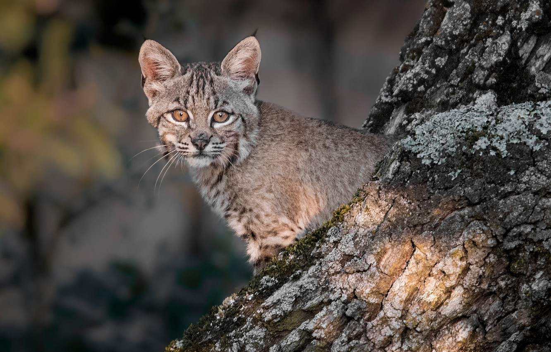 Photo wallpaper look, tree, cub, kitty, lynx