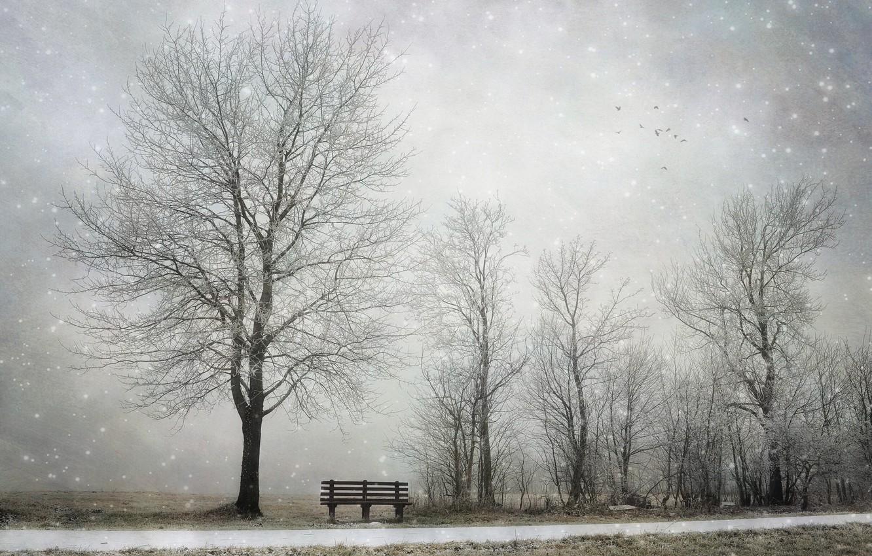 Photo wallpaper winter, snow, tree, bench