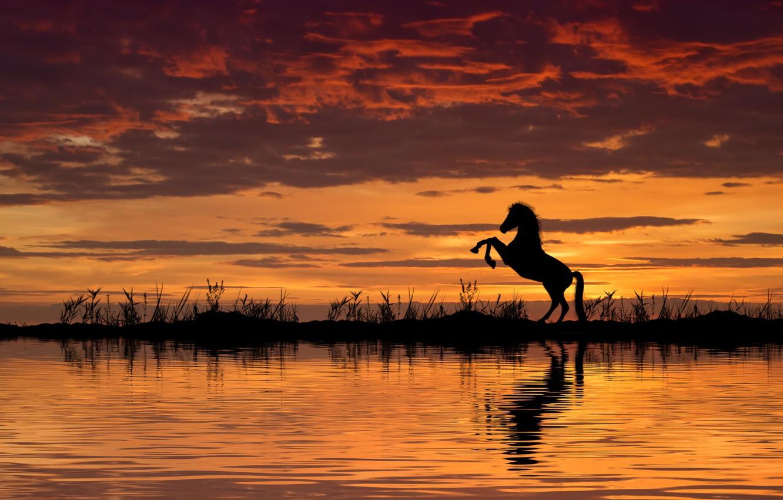 Photo wallpaper water, sunset, horse, horse