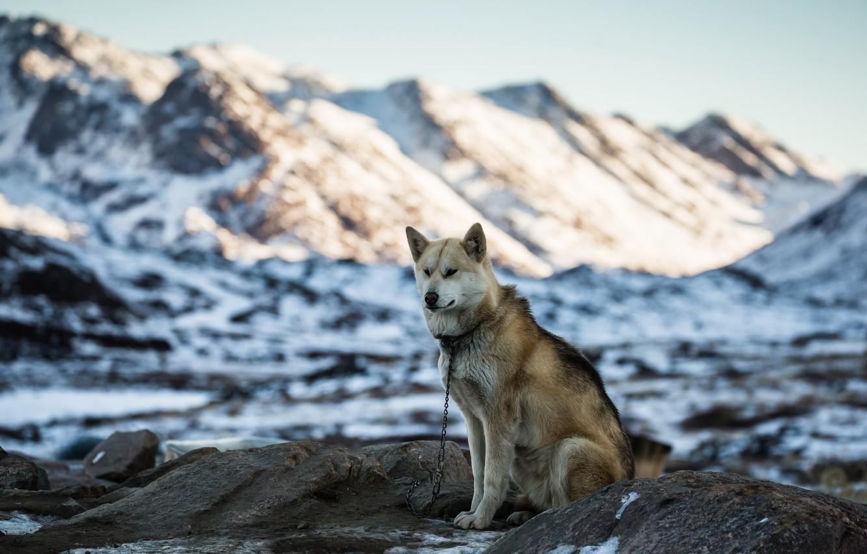 Photo wallpaper mountains, each, dog