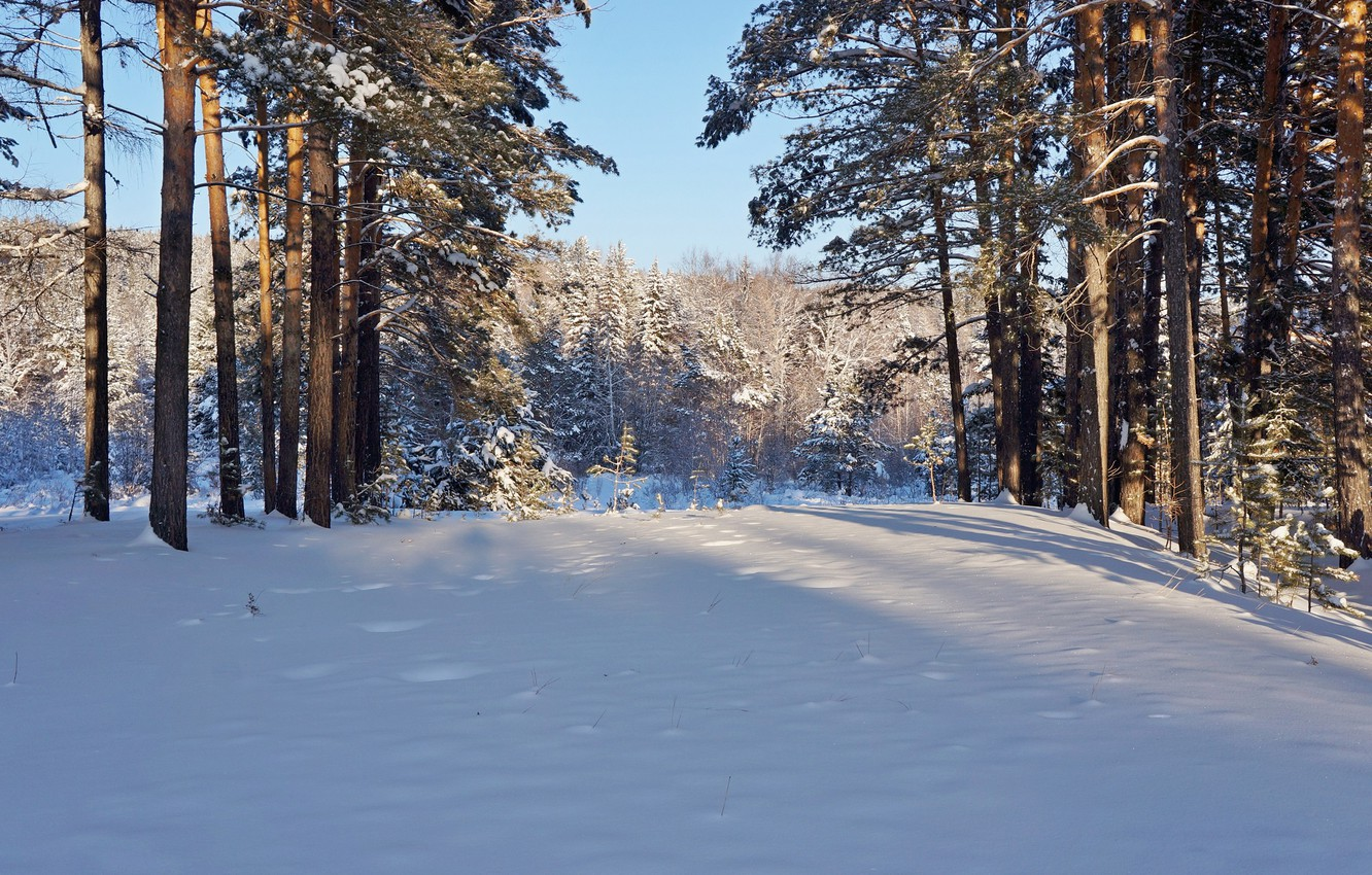 Photo wallpaper winter, forest, the sun, snow, trees, nature, frost, pine