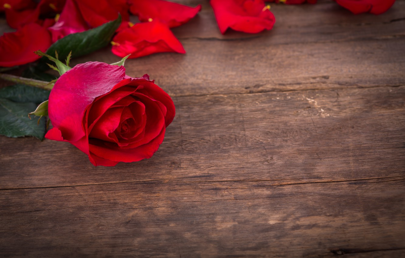 Photo wallpaper roses, red, love, buds, flowers, romantic, roses, red roses, valentine`s day