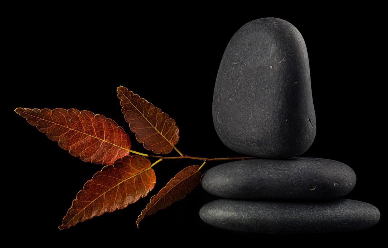 Photo wallpaper reflection, stones, leaf