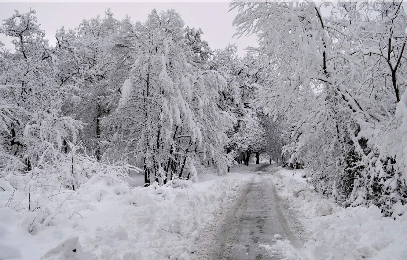 Photo wallpaper Winter, Snow, Forest, Frost, Track, Winter, Frost, Snow, Forest, Trees, Path