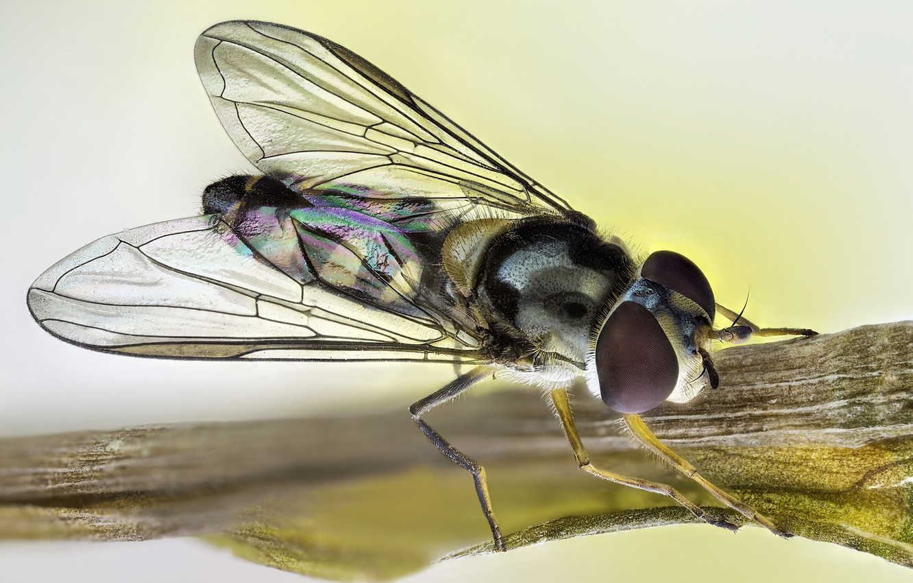 Photo wallpaper fly, insect, rainbow wings