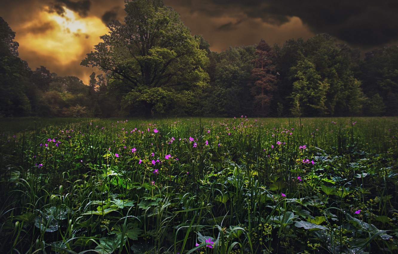 Photo wallpaper field, flowers, night