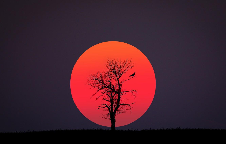 Photo wallpaper red, black, bird, sun