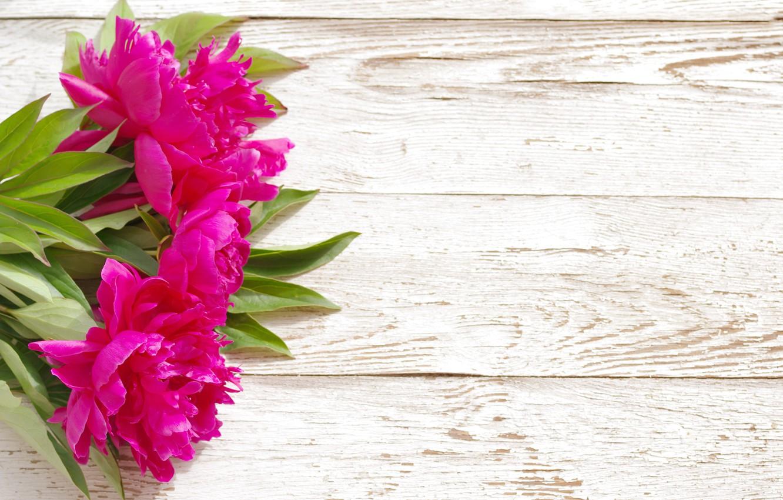 Wallpaper Pink Wood Pink Flowers Beautiful Peonies Peony