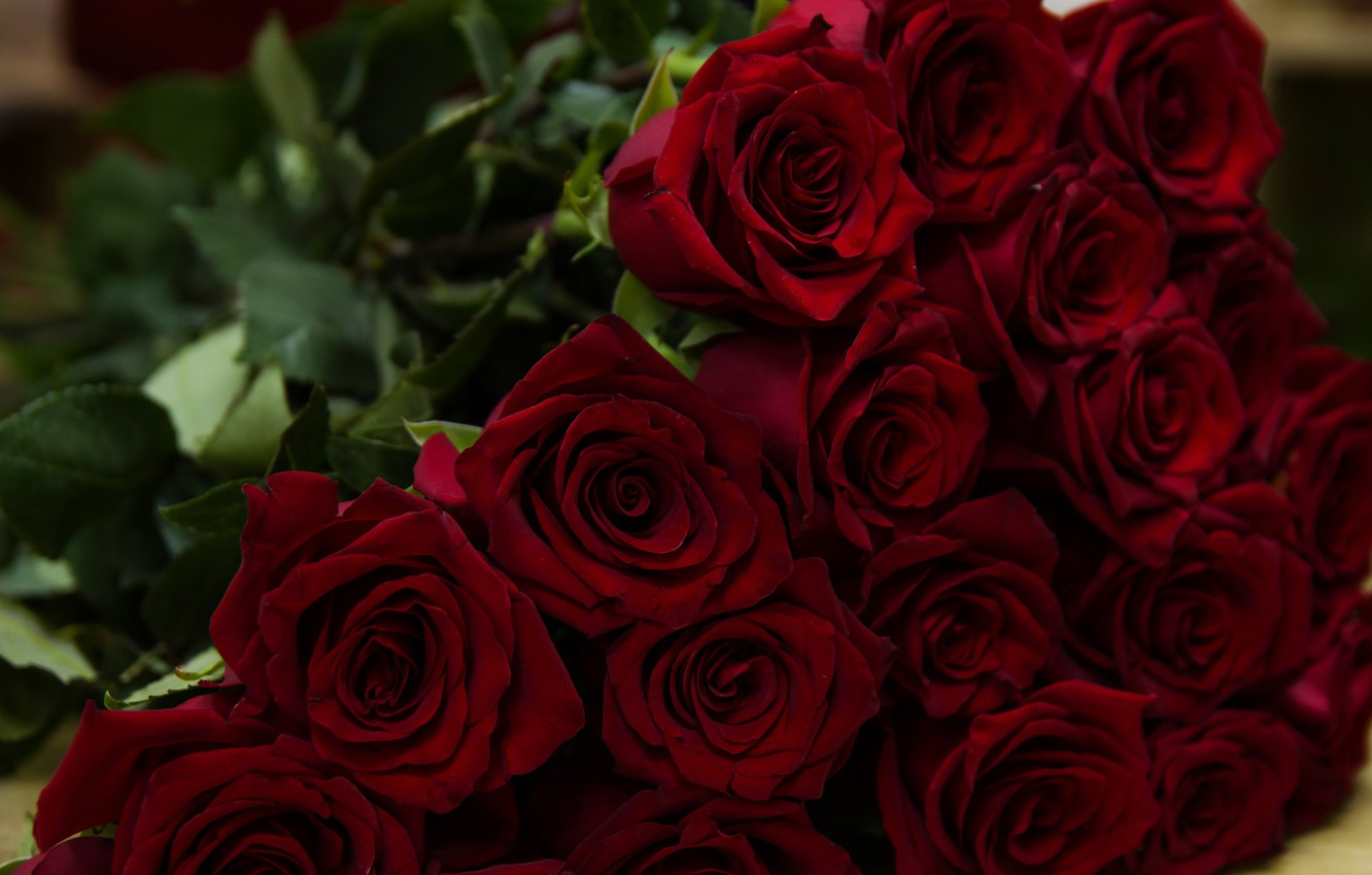 Photo wallpaper red, bouquet, Roses, buds