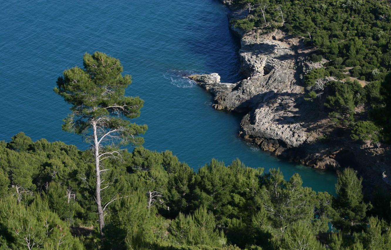 Photo wallpaper sea, trees, coast, Rocks, Italy, Italy, pine, Italia, Apulia, Apulia, Monte-Gargano, Gargano