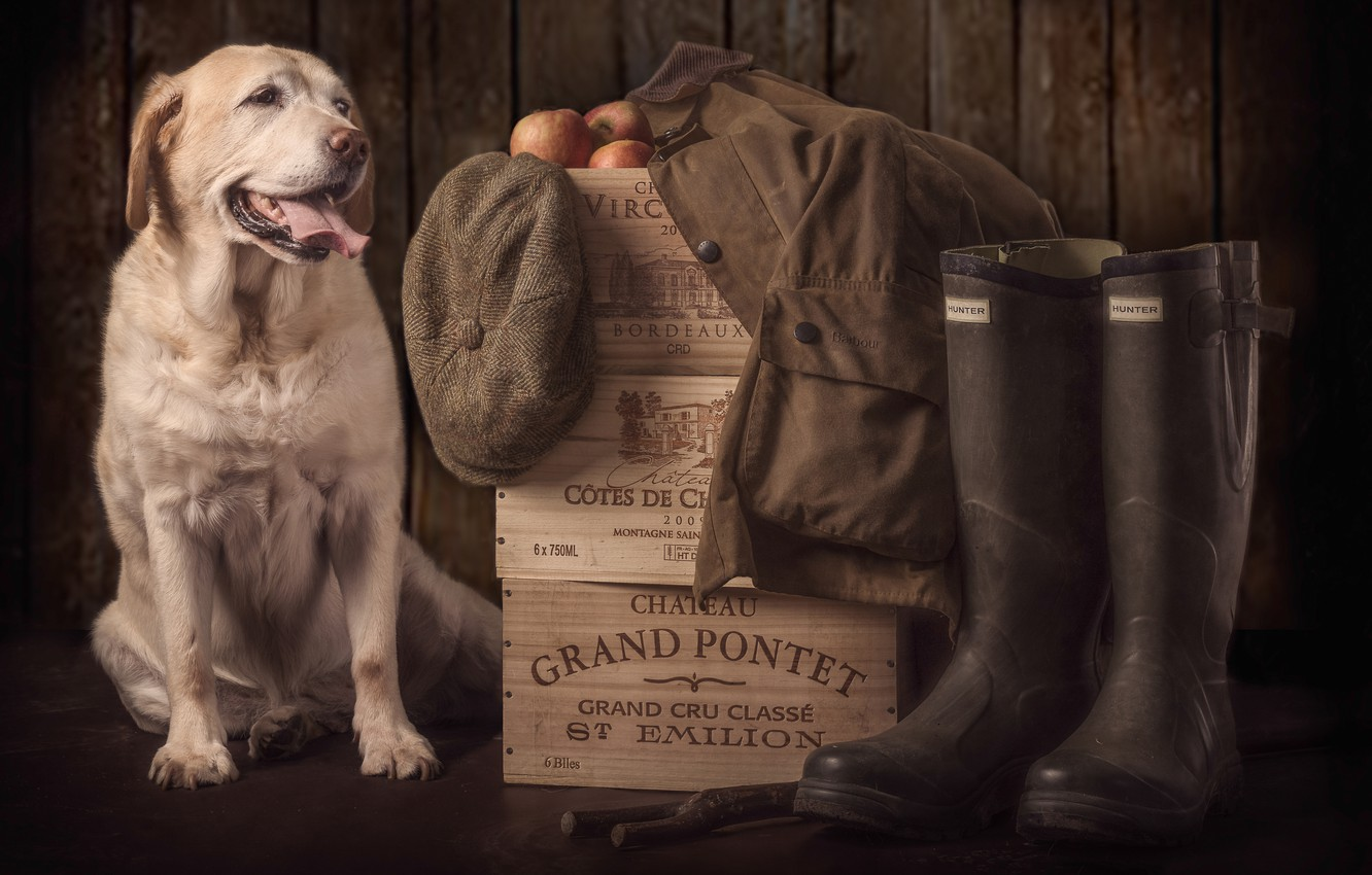 Photo wallpaper dog, boots, boxes, cap