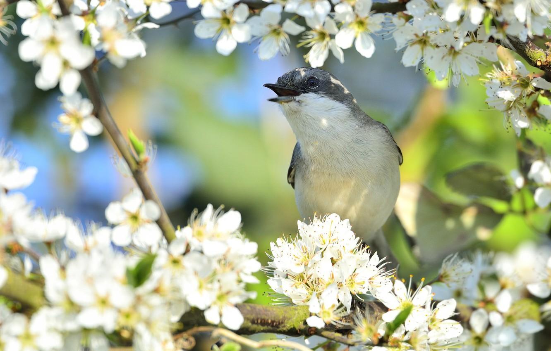 Photo wallpaper flowers, nature, tree, bird, spring