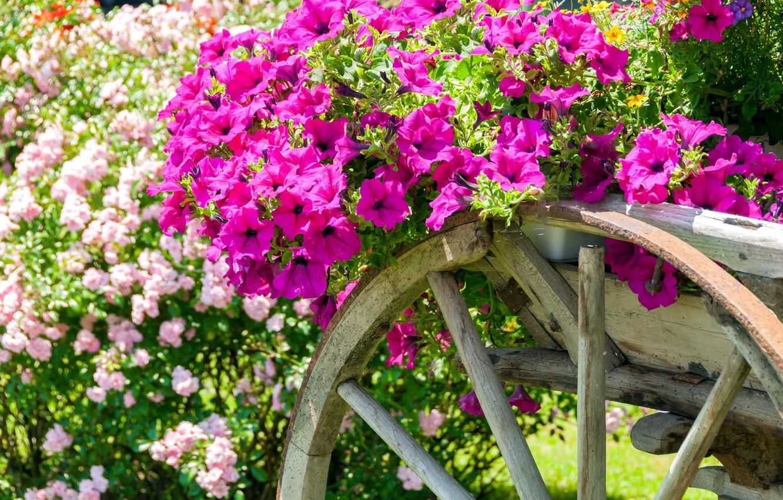 Photo wallpaper flowers, cart, petunias, calibrachoa