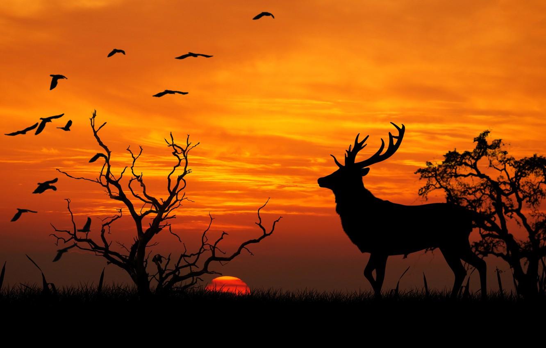 Photo wallpaper nature, vector, deer, silhouette, horns