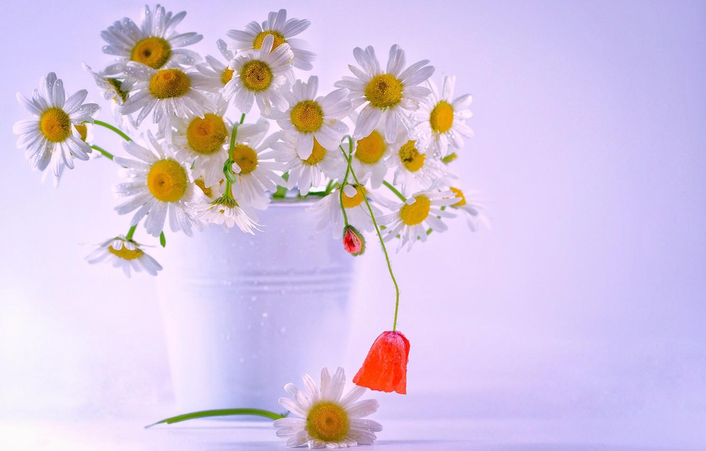 Photo wallpaper flowers, chamomile, bouquet, bucket