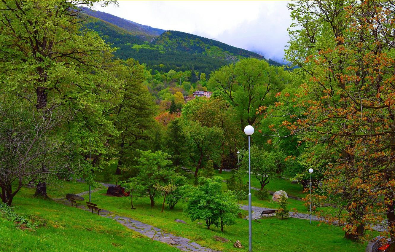 Photo wallpaper trees, Greens, Spring, lights, Park, Nature, Green, Park, Spring, Trees