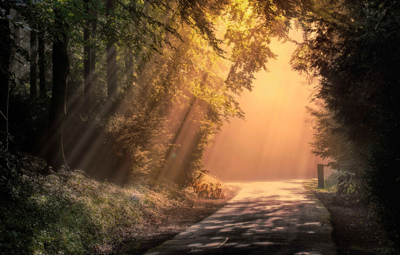 Photo wallpaper road, forest, rays, England, morning, England, Wendover Woods, Chiltern Hills, Wendover, Chiltern Hills