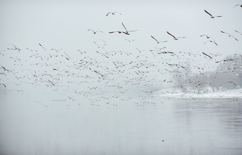 Photo wallpaper Birds, fog, Lithuania, Kaunas