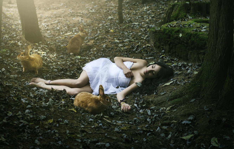 Photo wallpaper forest, girl, rabbits