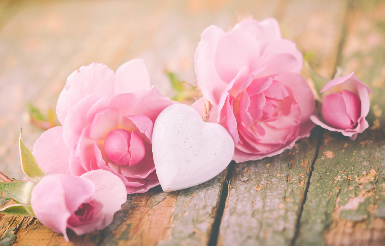 Photo wallpaper roses, petals, love, heart, pink, flowers, romantic, roses, valentine`s day
