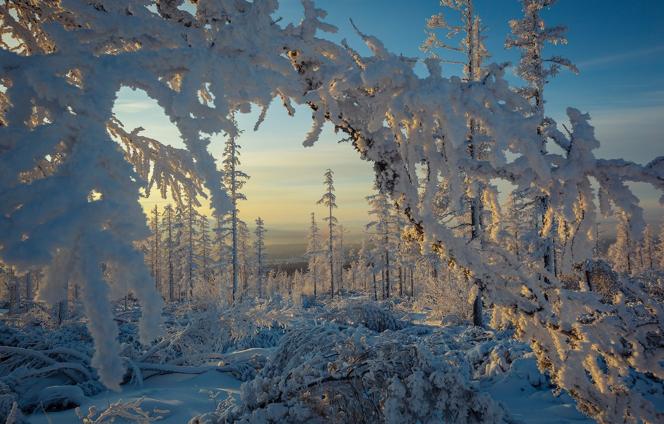 Photo wallpaper winter, forest, snow, trees, branches, frost, the snow, Russia, southern Yakutia