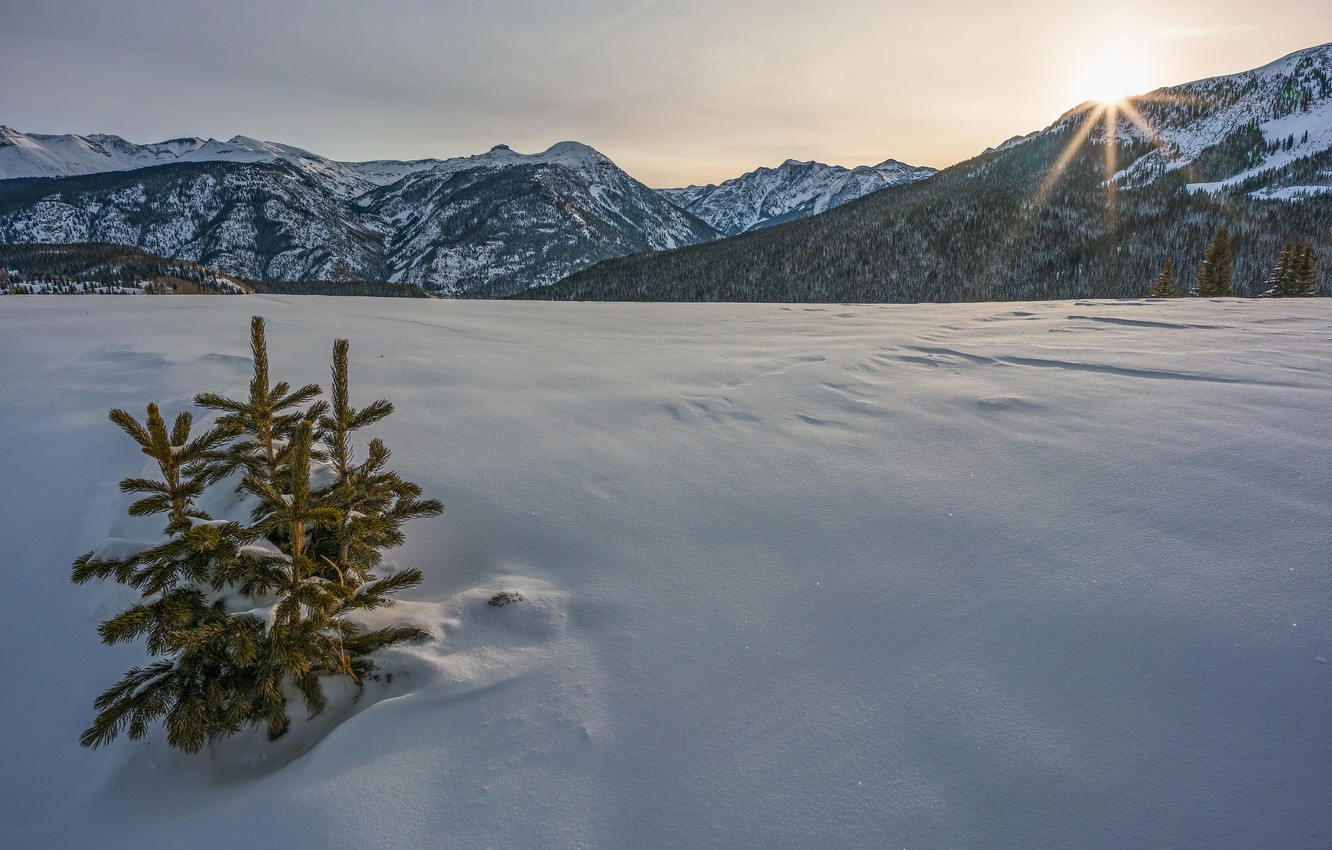 Christmas In Colorado Mountains.Wallpaper Winter Snow Mountains Colorado Christmas Trees
