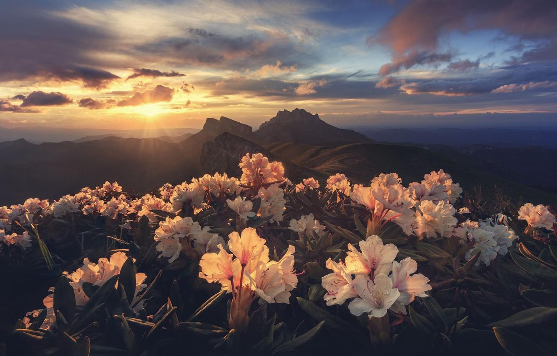 Photo wallpaper the sun, light, flowers, mountains, morning