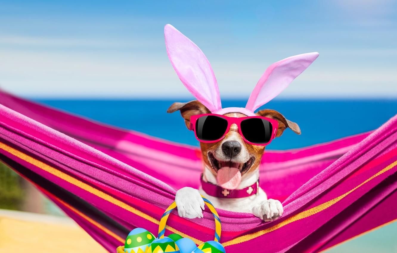 Photo wallpaper sea, language, beach, the sky, the sun, holiday, basket, photoshop, eggs, humor, paws, horizon, glasses, …