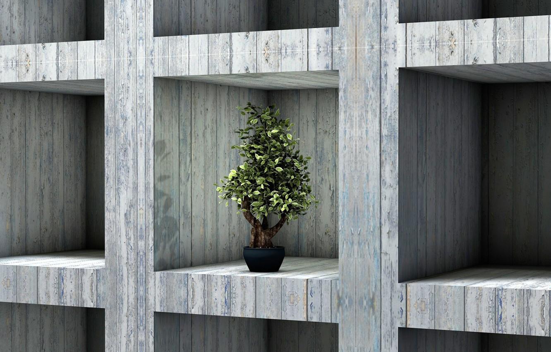 Photo wallpaper bonsai, plant, interior, shelf, rack
