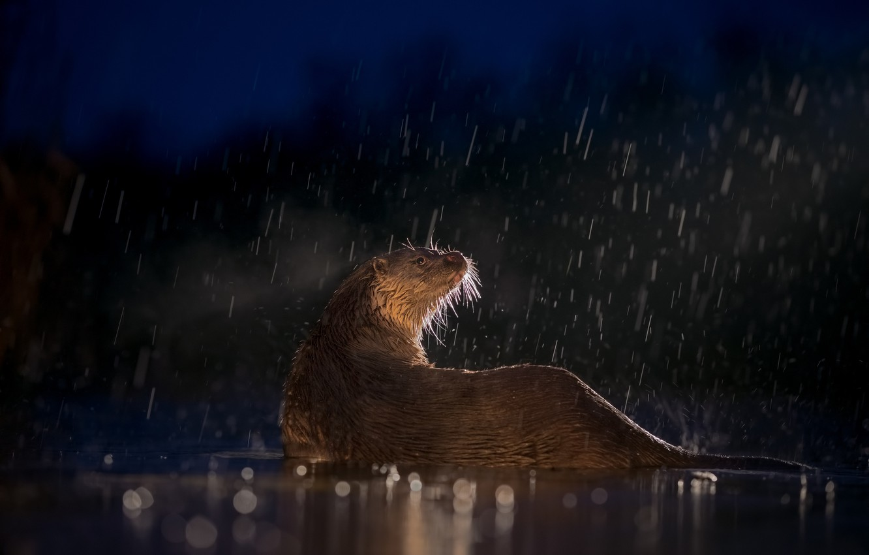 Photo wallpaper water, light, night, rain, wet, the evening, bokeh, otter, vidracco