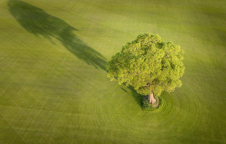 Photo wallpaper field, tree, England, shadow, England, Yorkshire, Yorkshire, Everingham, Everingham