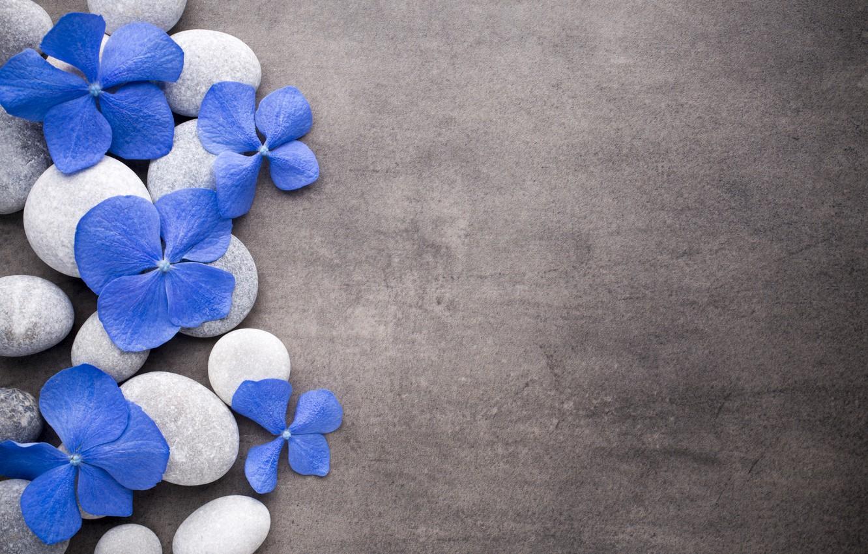Photo wallpaper flowers, stones, blue, flowers, stones, spa, zen