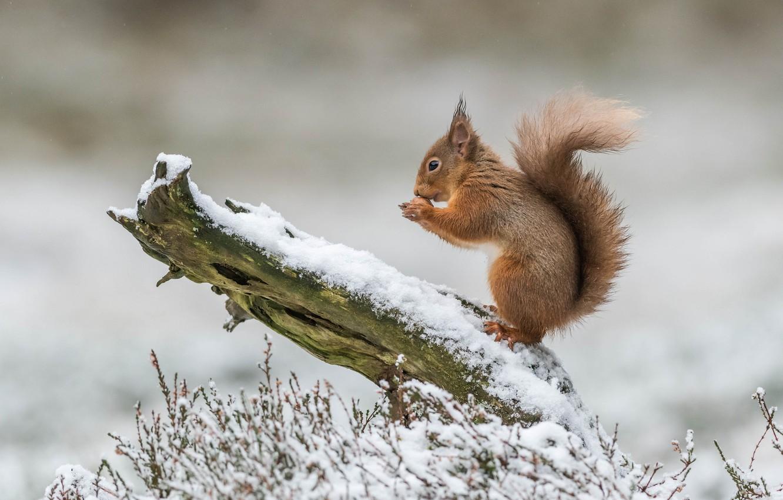 Photo wallpaper winter, grass, snow, nature, tree, protein