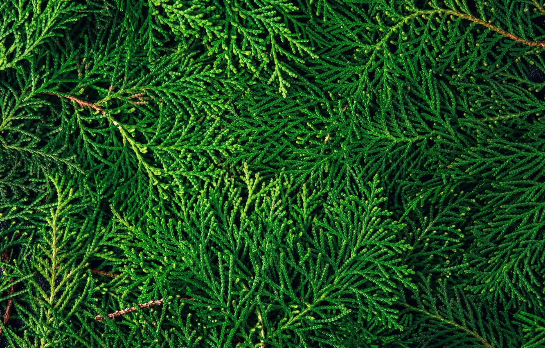 Photo wallpaper Texture, needles, twigs