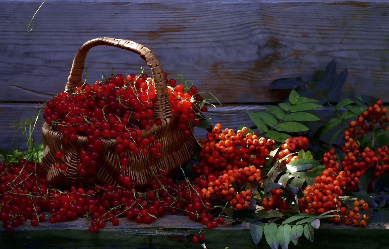 Photo wallpaper summer, berries, still life, basket, Rowan, red currant