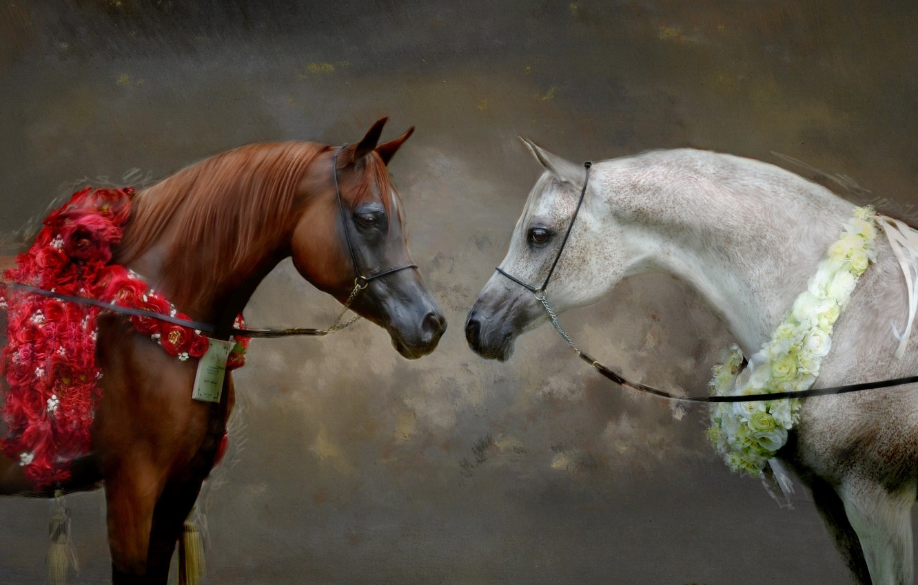 Photo wallpaper white, look, flowers, grey, background, horses, portrait, picture, horse, art, pair, painting, muzzle, strokes, chestnut