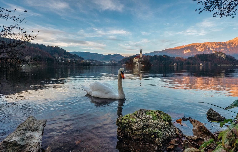 Photo wallpaper landscape, mountains, nature, lake, bird, Alps, Swan, Slovenia, Slovenia, Bled, Bled