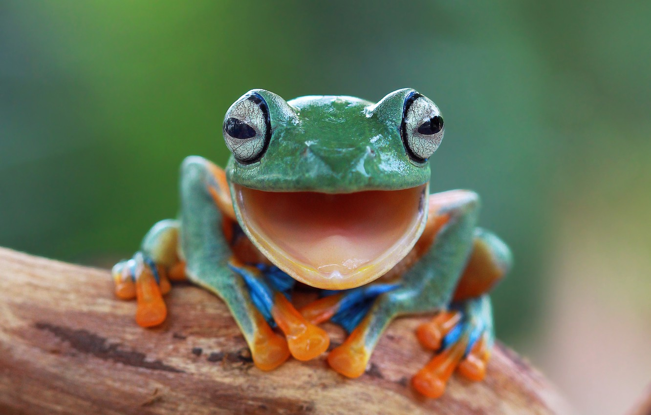 Photo wallpaper eyes, nature, background, frog, legs, blur, green, animals, nature, frog, bokeh, East, province, Indonesia, Java, …