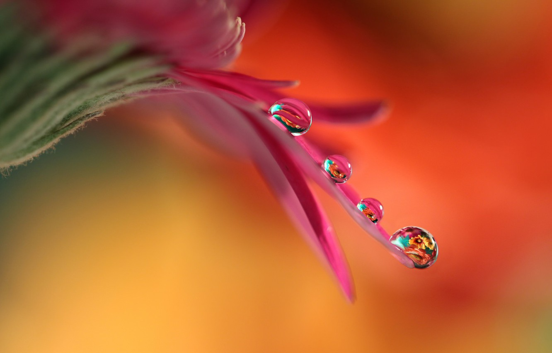 Photo wallpaper flower, drops, petal