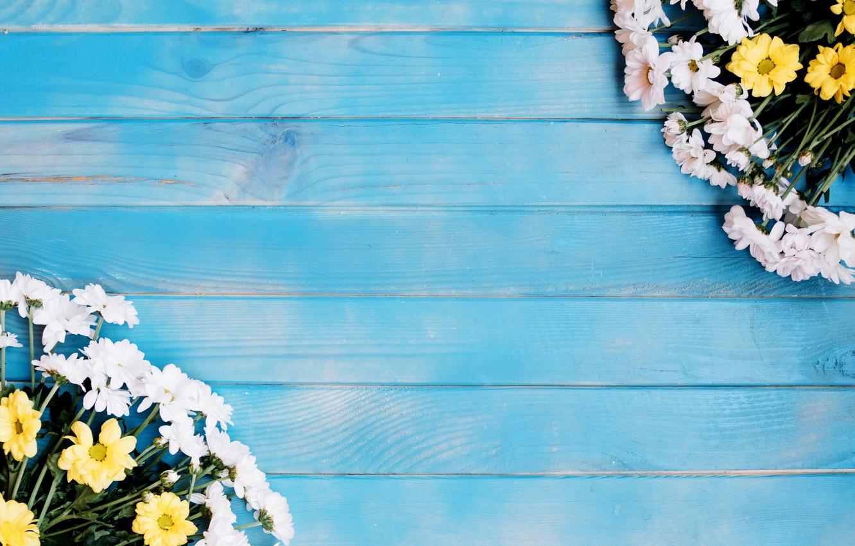 Photo wallpaper flowers, chrysanthemum, blue background