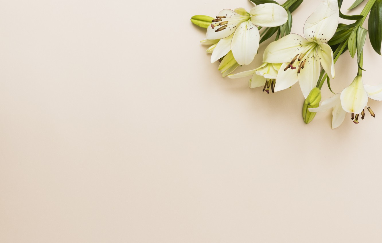 Photo wallpaper white, flowers, bouquet, Lily
